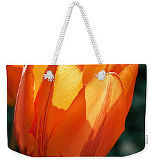 Weekender Tote Bag featuring the photograph Sun Kissed Tulip by Barbara McMahon