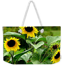 Weekender Tote Bag featuring the photograph Sunflowers by Rose Santuci-Sofranko
