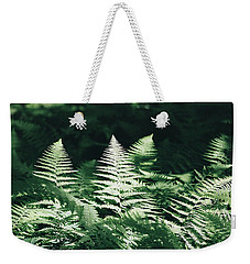 Weekender Tote Bag featuring the photograph Sunlight And Shadows-algonquin Ferns by David Porteus