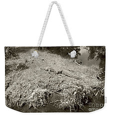 Weekender Tote Bag featuring the photograph Sunny Gator Sepia  by Joseph Baril