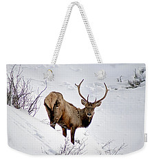 Weekender Tote Bag featuring the photograph Surviving by Jeremy Rhoades