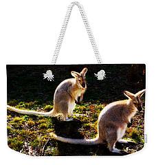 Red-necked Wallabies Weekender Tote Bag