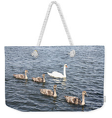 Weekender Tote Bag featuring the photograph Swan And His Ducklings by John Telfer