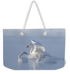 Trumpeter Swans - Three's Company Weekender Tote Bag by Patti Deters