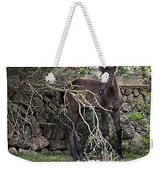 sweet heart - A tender foal wait his beloved mother  Weekender Tote Bag