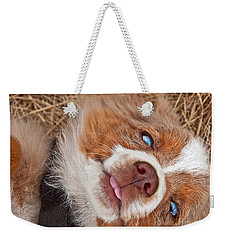 Weekender Tote Bag featuring the photograph Sweet Australian Shepherd Puppy Face Art Prints by Valerie Garner