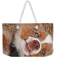 Sweet Australian Shepherd Puppy Face Art Prints Weekender Tote Bag by Valerie Garner