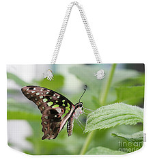 Tailed Jay Butterfly #3 Weekender Tote Bag