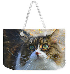 The Cat II Weekender Tote Bag