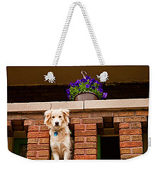 Weekender Tote Bag featuring the photograph The Critic by Kristi Swift