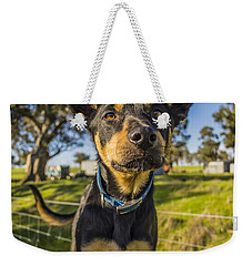 Weekender Tote Bag featuring the photograph The Curious Dog  by Naomi Burgess