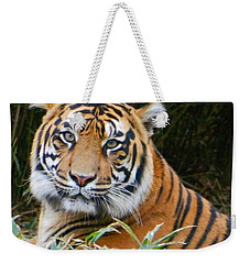 The Eyes Of A Sumatran Tiger Weekender Tote Bag
