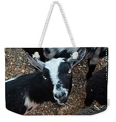Weekender Tote Bag featuring the photograph The Goat With The Gorgeous Eyes by Verana Stark