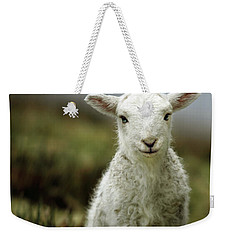 The Lamb Weekender Tote Bag