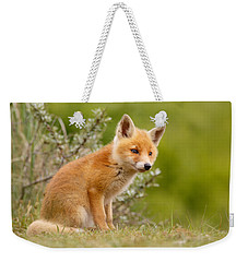 The New Kit ...curious Red Fox Cub Weekender Tote Bag