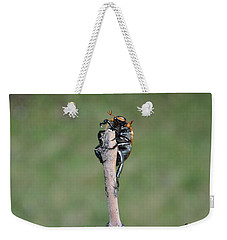 Weekender Tote Bag featuring the photograph The Posing Beetle by Verana Stark