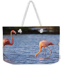 The Three Flamingos Weekender Tote Bag by Adam Romanowicz