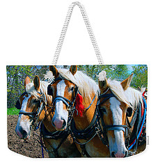 Weekender Tote Bag featuring the photograph Three Horses Break Time  by Tom Jelen