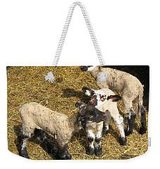 Three Little Lambs In Spring Sunshine Weekender Tote Bag