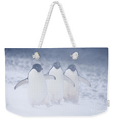 Three Penguins In A Blizzard Weekender Tote Bag