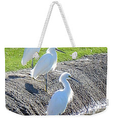 Weekender Tote Bag featuring the photograph Three Stooges by Deb Halloran