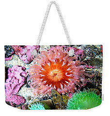 Tide Pool Creatures Weekender Tote Bag by Nick Kloepping