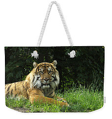 Weekender Tote Bag featuring the photograph Tiger At Rest by Lingfai Leung