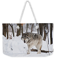 Weekender Tote Bag featuring the photograph Timber Wolf In Winter Forest by Wolves Only