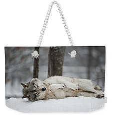 Timber Wolf In Winter Weekender Tote Bag by Wolves Only