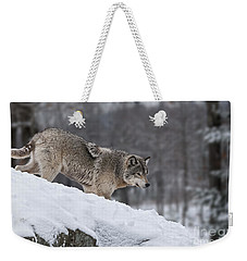 Timber Wolf On Hill Weekender Tote Bag by Wolves Only