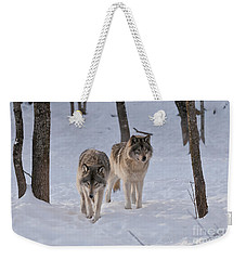 Weekender Tote Bag featuring the photograph Timber Wolf Pair  by Wolves Only