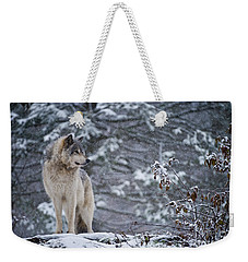 Timber Wolf Pictures 189 Weekender Tote Bag