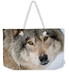 Timber Wolf Pictures 255 Weekender Tote Bag by Wolves Only