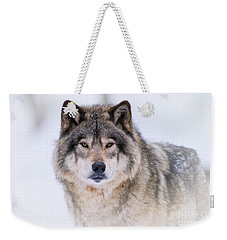 Timber Wolf Pictures 256 Weekender Tote Bag by Wolves Only