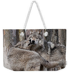 Weekender Tote Bag featuring the photograph Timber Wolves Playing by Wolves Only