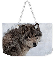Weekender Tote Bag featuring the photograph Timberwolf At Rest by Bianca Nadeau