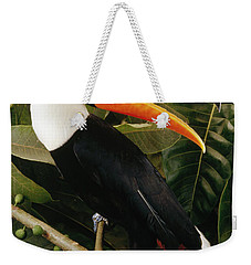 Toco Toucan Ramphastos Toco Calling Weekender Tote Bag by Claus Meyer