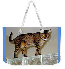Weekender Tote Bag featuring the photograph Tora On Glass II by Phyllis Kaltenbach