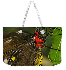 Weekender Tote Bag featuring the photograph Troides Helena Butterfly  by Olga Hamilton
