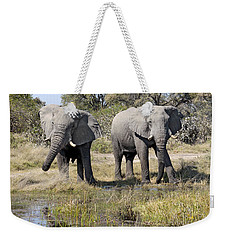 Two Male Elephants Okavango Delta Weekender Tote Bag