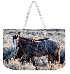 Velvet - Young Colt In Sand Wash Basin Weekender Tote Bag
