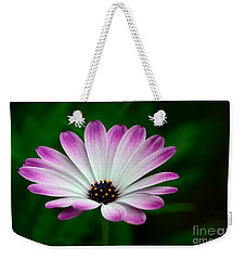 Violet And White Flower Petals With Yellow Stamens Blossoms  Weekender Tote Bag