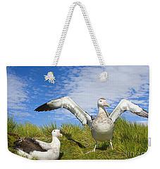 Wandering Albatross Courting  Weekender Tote Bag by Yva Momatiuk John Eastcott