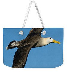 Waved Albatross Diomedea Irrorata Weekender Tote Bag by Panoramic Images