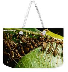 Weaver Ant Group Binding Leaves Weekender Tote Bag by Mark Moffett