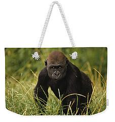 Western Lowland Gorilla Juvenile Weekender Tote Bag by Gerry Ellis