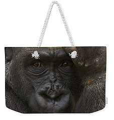 Western Lowland Gorilla With Hand Weekender Tote Bag by San Diego Zoo