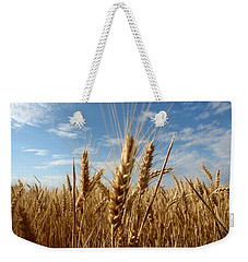 Wheat Field In A Sunny Summer Day Weekender Tote Bag