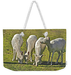 White Fallow Deer Mt Madonna County Park Weekender Tote Bag