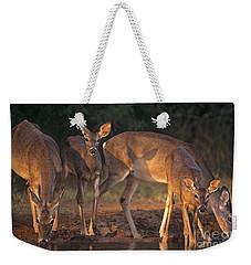 Whitetail Deer At Waterhole Texas Weekender Tote Bag